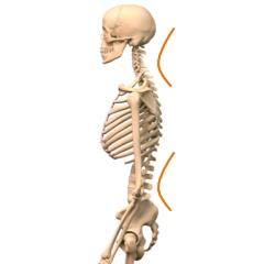 腰と首の S字形の湾曲は負荷がかかり腰痛や肩こりを起こしやすくなります。